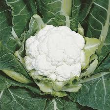 All year round cauliflower plants