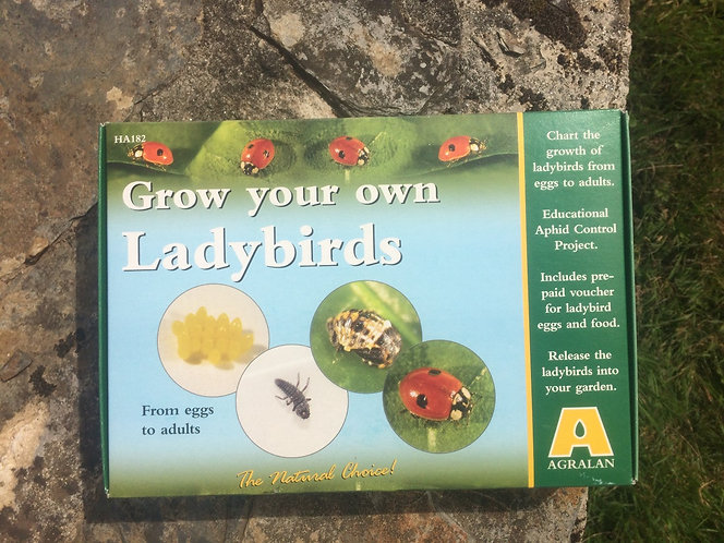 Grow your own Ladybirds and help control pests in your garden