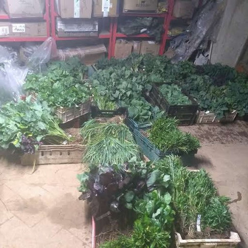 Brassica plants  waiting to be boxed