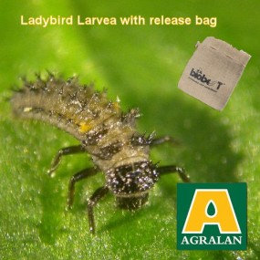 Aphid Control with Ladybird Larvae- natural pest control- with release bag