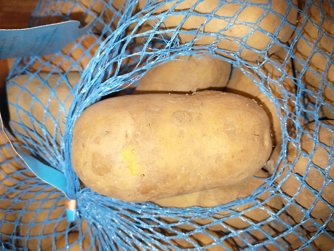 Colleen  organic seed potato first early