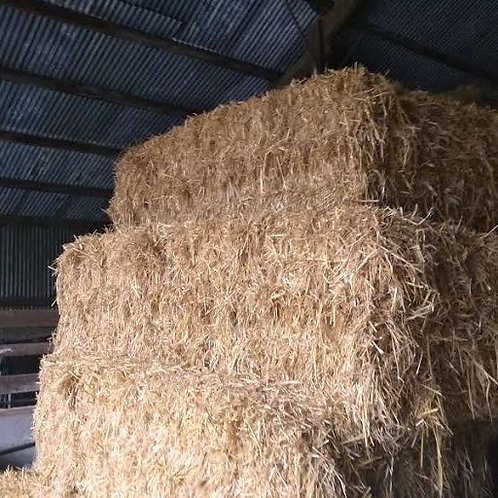 Straw big square 8.5 foot long   bales for bedding or could be used for feeding