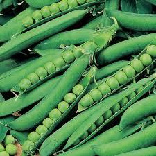 Hurst Greenshaft pea seeds grower pk