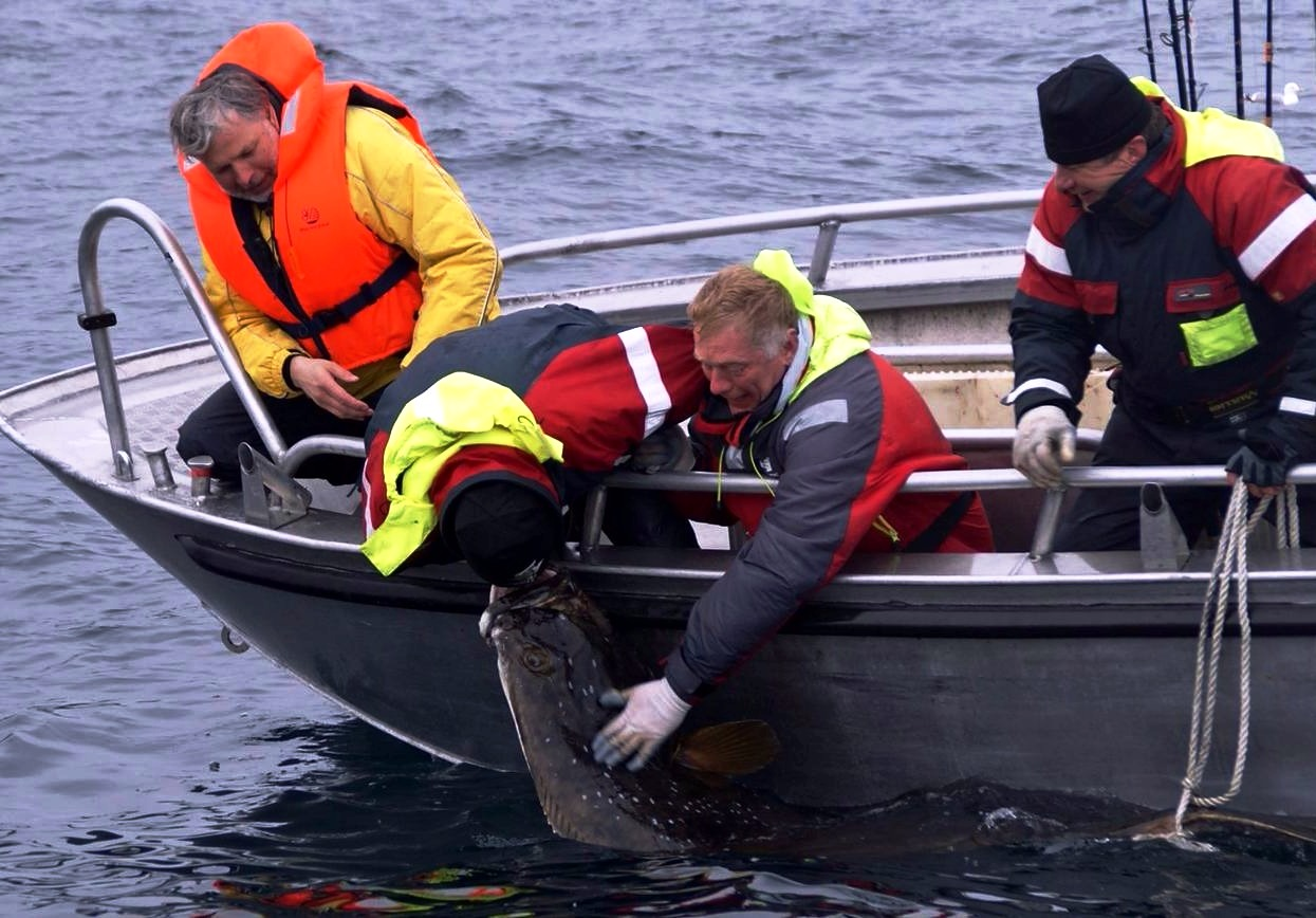 World Championship Halibut Fishing 2019