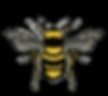 Bee-illustration-7_edited_edited.png