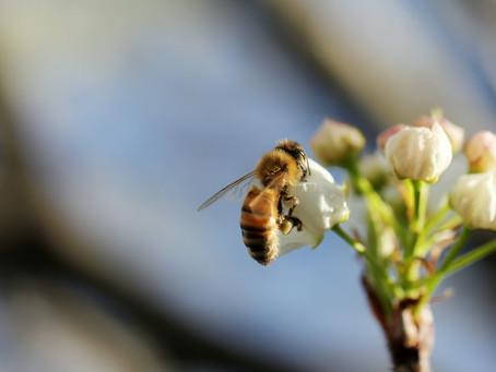 Über Bienen und warum Sie in unserem Logo ist.