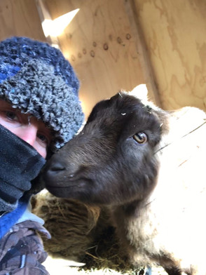 A cold girl and her goat