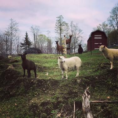picturesque farm scene