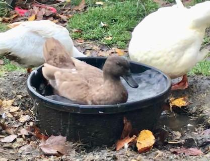 Having a quick swim in a bucket