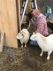 Four legged supervisors during the barn building