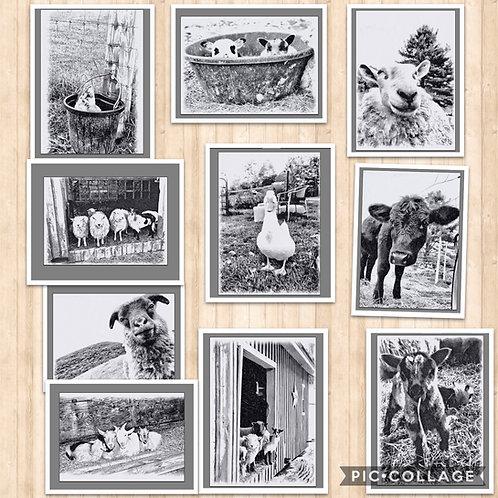 Black & White Barnyard 10 card pack