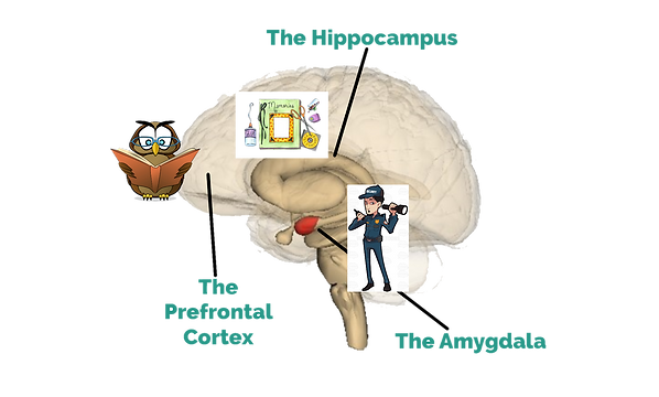 brain parts with pictures.png