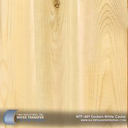 WTP-489 - Eastern White Cedar