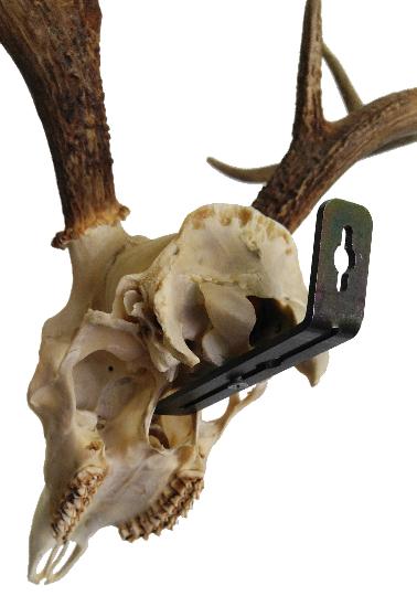 EuroRax Skull Mounting Bracket