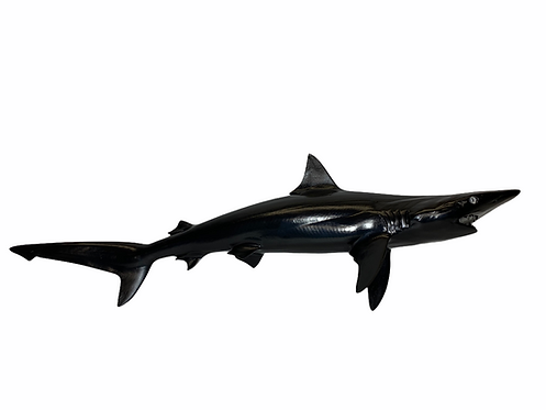 Custom Blacktip Shark Mount