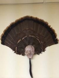 Bag R Buck Turkey Klaw Camo