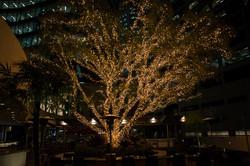 Fridays Bar & Restaurant Tree Light