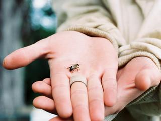 Comment bien se préparer à accueillir une ruche ?