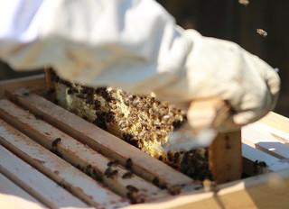Les apiculteurs de loisirs sont passionnants.