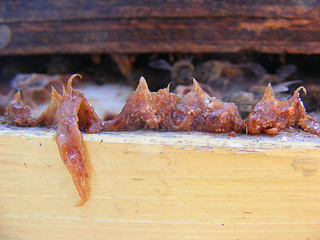Quel est cet antibiotique naturel présent au cœur de la ruche ?