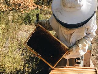 5 conseils pour éviter que vos abeilles soient agressives !