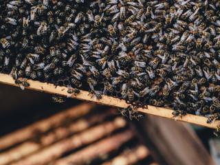 Histoires d'apicultrice - E2020-2 : la visite de printemps !