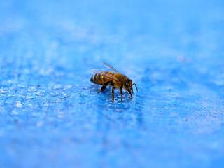 Comment éviter les abeilles dans votre piscine ?