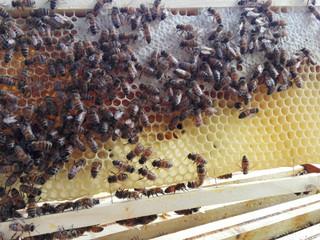 4 actions pour accompagner le développement des colonies d'abeilles