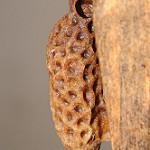 Une des plus grandes énigmes de la ruche.