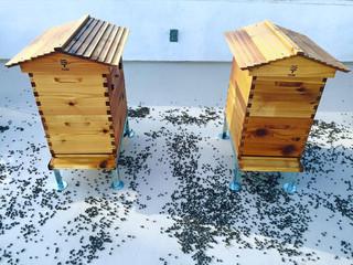 Comment sauver une ruche empoisonnée