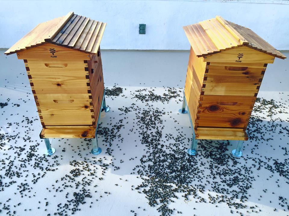 Une ruche en Provence - Séverine JUILLARD