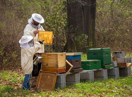 5 conseils aux apiculteurs de loisirs.