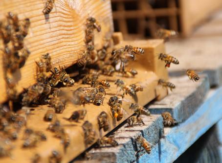 La première chose à faire avant d'avoir une ruche
