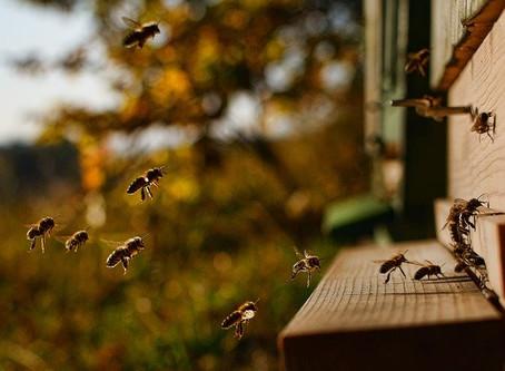 Les règles à respecter dès l'installation de la première ruche.