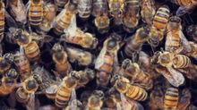 6 choses que vous ne savez pas sur les reines des abeilles