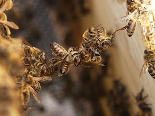 Comment écraser moins d'abeilles ?