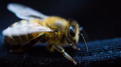 parrainer une ruche