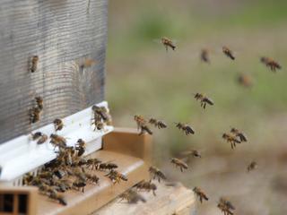 Histoires d'apicultrice - E2020-1: Le printemps est là !