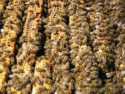 Une ruche en Provence _ Séverine JUILLARD