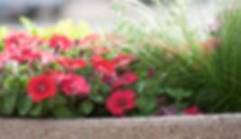 Downtown Flowers10.jpg