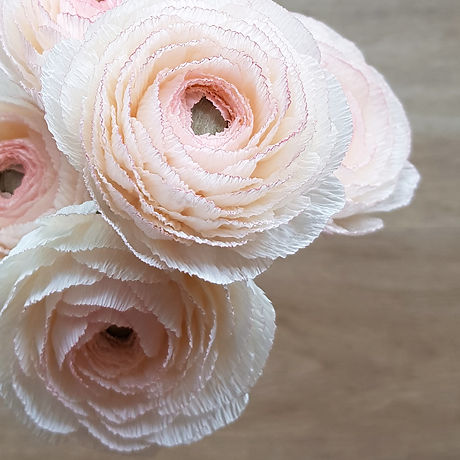 Creme Blush Ranunculus