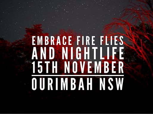 Embrace Fire Flies and Nightlife Walk