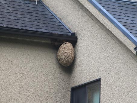 ハチの巣駆除について