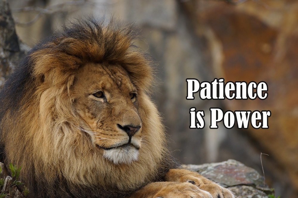 quote about patience