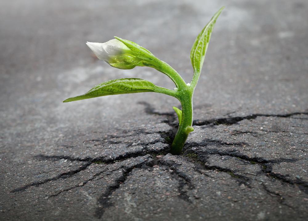 Plant breaking through concrete