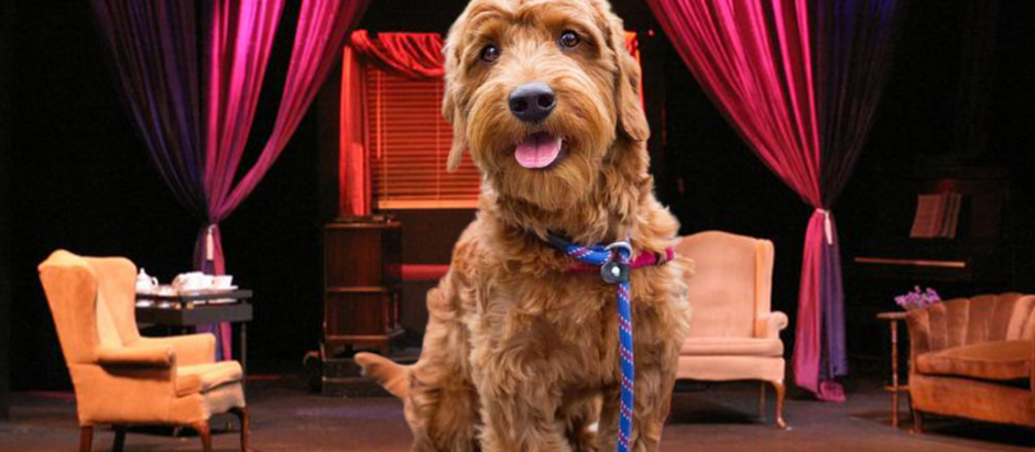 BREAKING: Show Has a Dog In It!