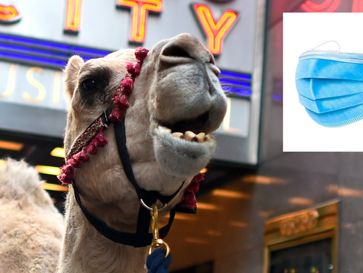"""Radio City """"Christmas Spectacular"""" Canceled After Camel from Nativity Scene Comes Out as Anti-Mask"""