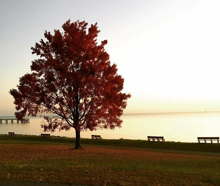 Autumn chesapeake