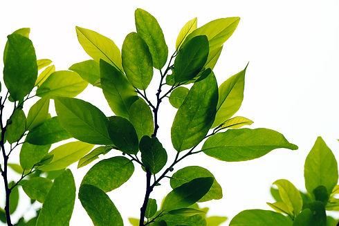 foliage_189136223.jpg