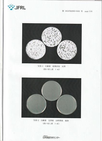 白癬菌試験-5.jpg